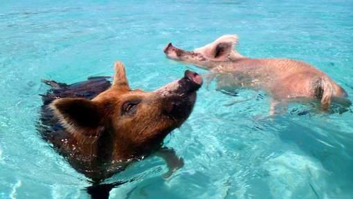 zwemmen carfl van de keere